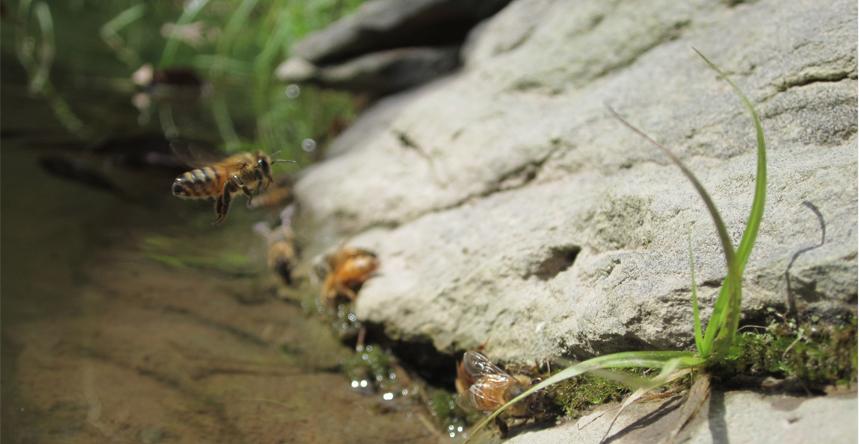 beeswater.jpg
