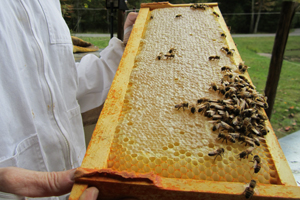 service-honey-extraction.jpg